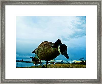 Curious Framed Print by Joshua Dwyer
