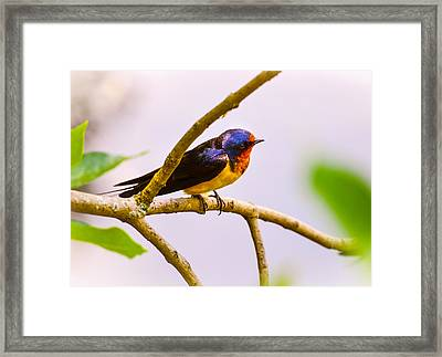 Curious  Framed Print by Julie Palencia