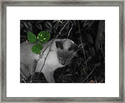 Curious Kitty Framed Print by Rani De Leeuw