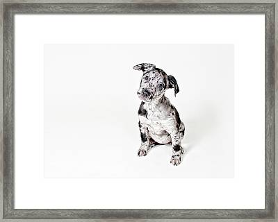 Curious Puppy Framed Print by Chad Latta