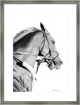 Curlin Framed Print by Christopher A Newman