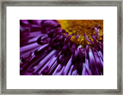 Curling Up Framed Print by Christy Phillips