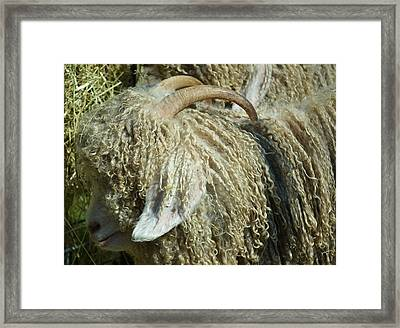 Framed Print featuring the photograph Curly Locks by Mary Zeman