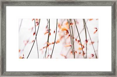 Curtain Framed Print by Priska Wettstein