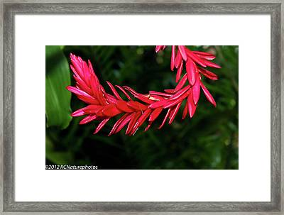 Framed Print featuring the photograph Curve Straight Ahead by Rachel Cohen