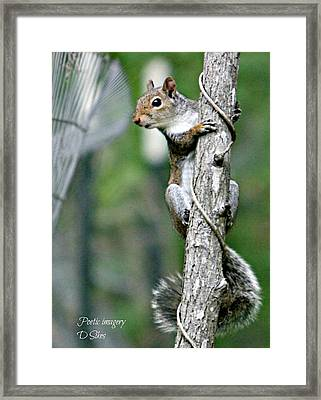 Curves Framed Print by Debbie Sikes