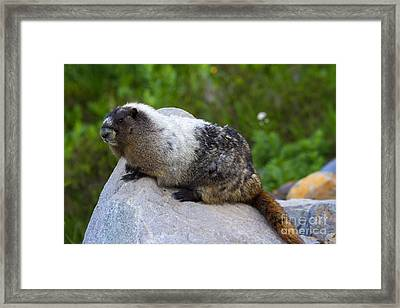 Cute And Fuzzy Framed Print by Mike  Dawson