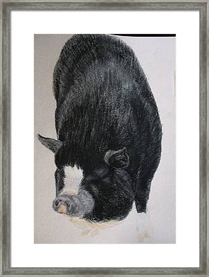 Cute Black Piggy Pet Portraits Original Watercolor Memorial U Provide Picture Or Idea 9 X 12 Inch  Framed Print by Shannon Ivins
