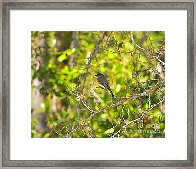 Cute Chickadee Framed Print