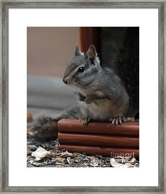 Cute Chipmunk Framed Print by Kenny Bosak