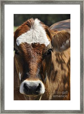 Cute Cow Framed Print