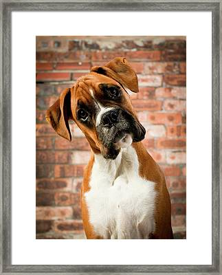 Cute Dog Framed Print by Danny Beattie Photography