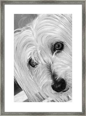 Cute Dog Framed Print by Imagevixen Photography