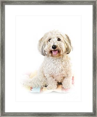 Cute Dog Portrait Framed Print by Elena Elisseeva