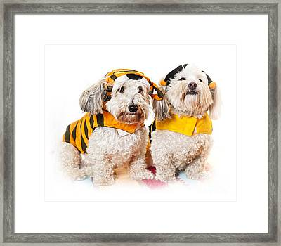 Cute Dogs In Halloween Costumes Framed Print by Elena Elisseeva