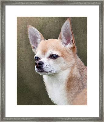 Framed Print featuring the photograph Cute Fawn Chihuahua Dog by Ethiriel  Photography