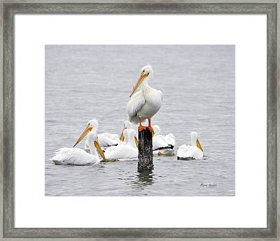 Cute Feet Framed Print