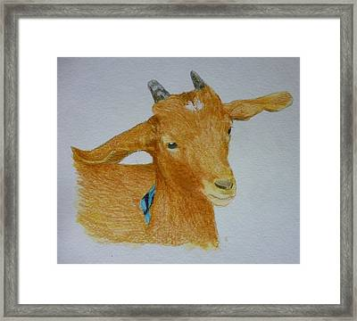Cute Goat Pet Portrait 5 X 7 Inch Watercolor You Provide The Picture Or Idea Made To Order  Framed Print by Shannon Ivins