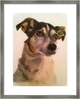 Cute Jack Russell Framed Print by Diane Leuzzi