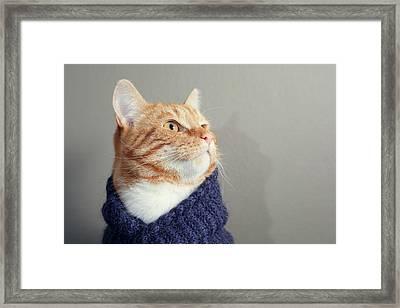 Cute Red Cat With Purple Scarf Framed Print by Paula Daniëlse