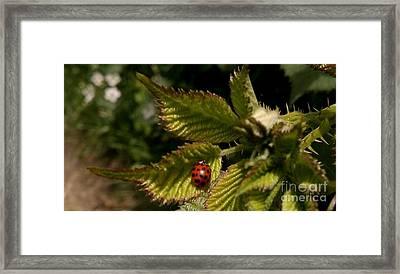 Cute Red Ladybug  Framed Print