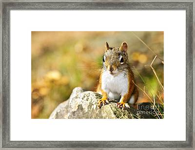 Cute Red Squirrel Closeup Framed Print