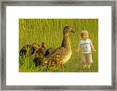 Cute Tiny Boy Playing With Ducks Framed Print by Jaroslaw Grudzinski