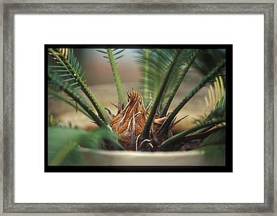 Cycad Framed Print by Miguel Capelo