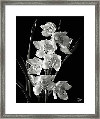 Cymbidium Cluster In Black And White Framed Print by Endre Balogh