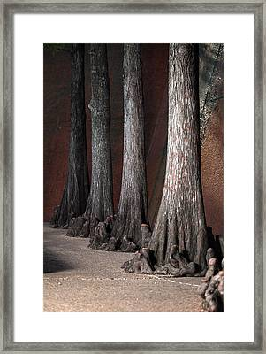 Cypress Framed Print by Greg Kopriva