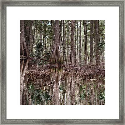 Cypress Hammock Framed Print by Joseph G Holland