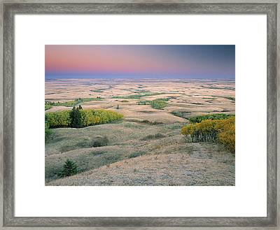 Cypress Hills Interprovincial Park Framed Print by Darwin Wiggett