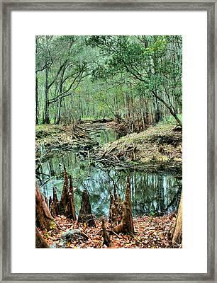 Cypress Knees Framed Print by Kristin Elmquist