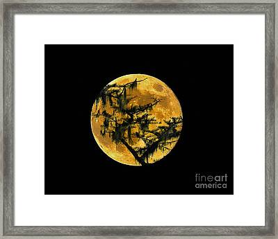 Cypress Moon Framed Print