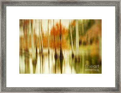 Cypress Morning Framed Print by Scott Pellegrin