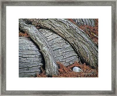 Cypress Overpass Framed Print by Joe Jake Pratt