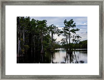 Framed Print featuring the photograph Cypress Swamp In Louisiana by Ester  Rogers