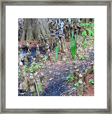 Cypress Swamp Land Framed Print by Mindy Newman