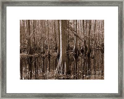 Cypress Swamp Reflection In Sepia Framed Print by Carol Groenen