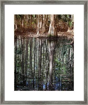 Cypress Swamp Reflections Framed Print by Joseph G Holland