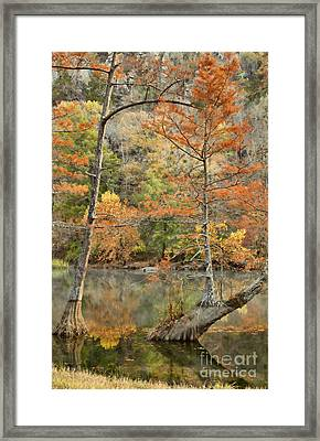 Cypress Trees In The Morning Light Framed Print by Iris Greenwell