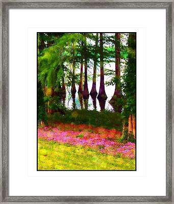 Cypress With Oxalis Framed Print by Judi Bagwell