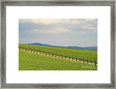 Cypresses Alley In Vineyards In Chianti Region Framed Print by Sami Sarkis