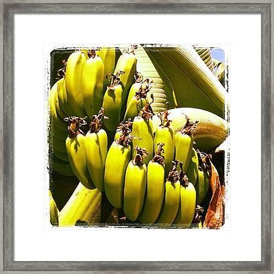 #cyprus #banana #coralbay #cyprus12 Framed Print