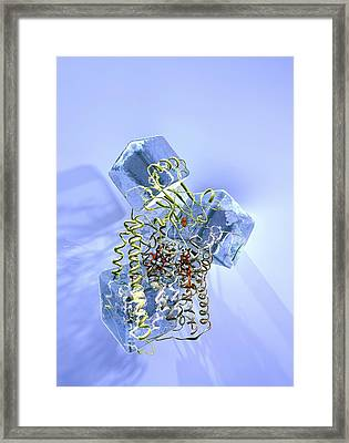 Cytochrome Aa3 Research, Conceptual Image Framed Print by Phantatomix