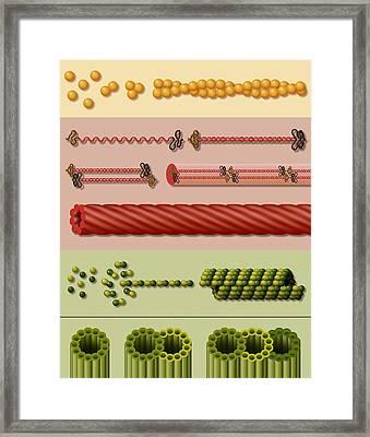 Cytoskeleton Components, Artwork Framed Print