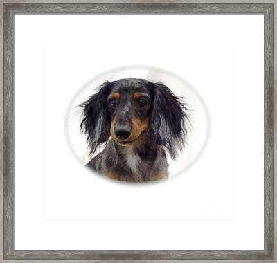 Dachshund 07 Framed Print by Larry Matthews