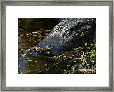 Daddy Alligator And His Baby Framed Print