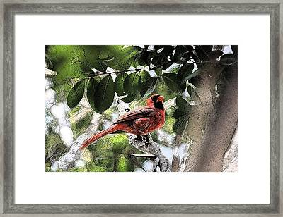 Framed Print featuring the photograph Daddy Cardinal by Donna G Smith
