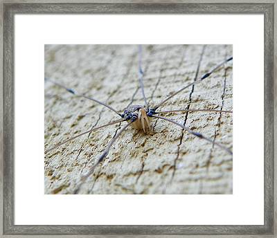 Framed Print featuring the photograph Daddy's Long Legs by Chad and Stacey Hall